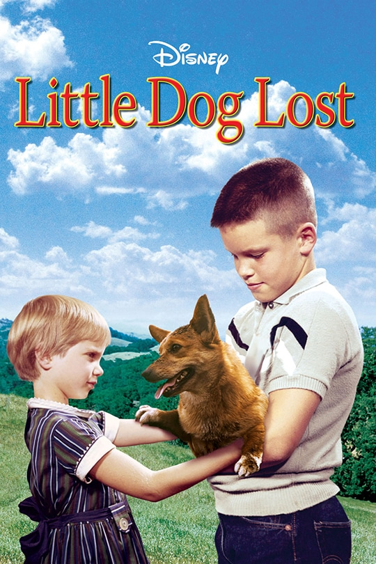Little Dog Lost Poster