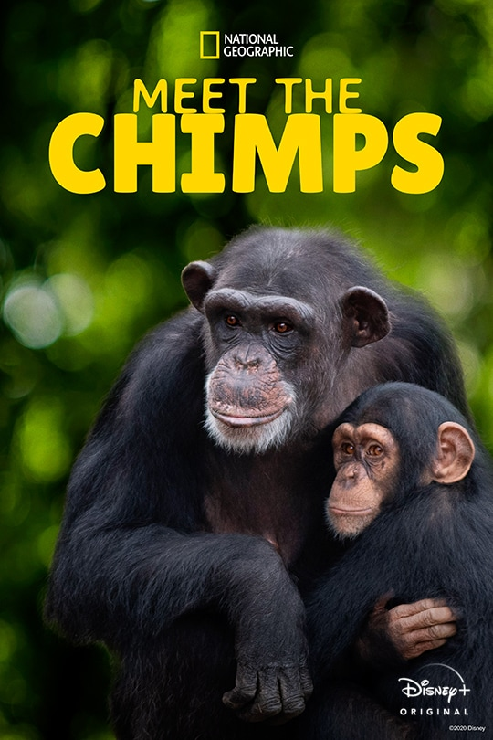 National Geographic | Meet the Chimps poster image