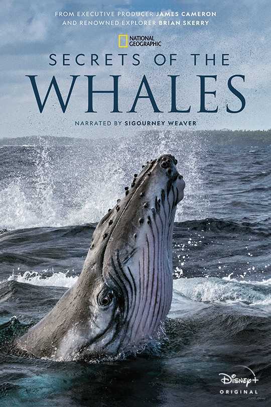 From Executive Producer James Cameron and Renowned Explorer Brian Skerry | National Geographic | Secrets of the Whales | Narrated by Sigourney Weaver | Disney+ Originals | movie poster