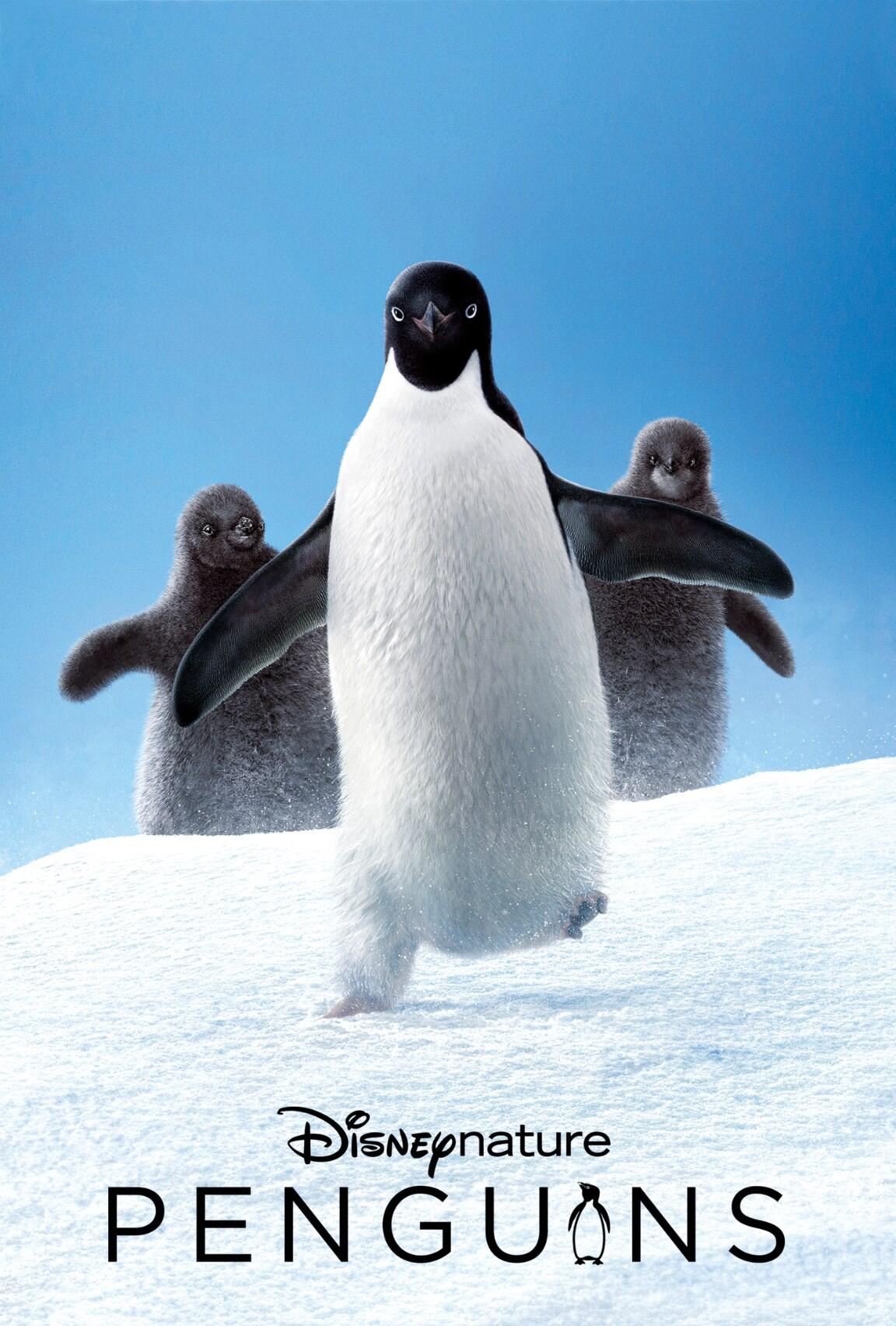 Penguins (2019)