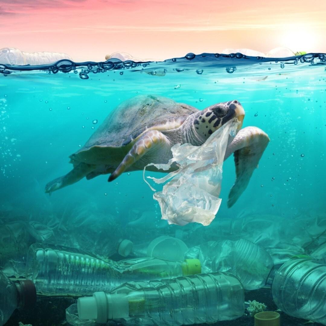 ¿Es posible eliminar el uso de bolsas de plástico?