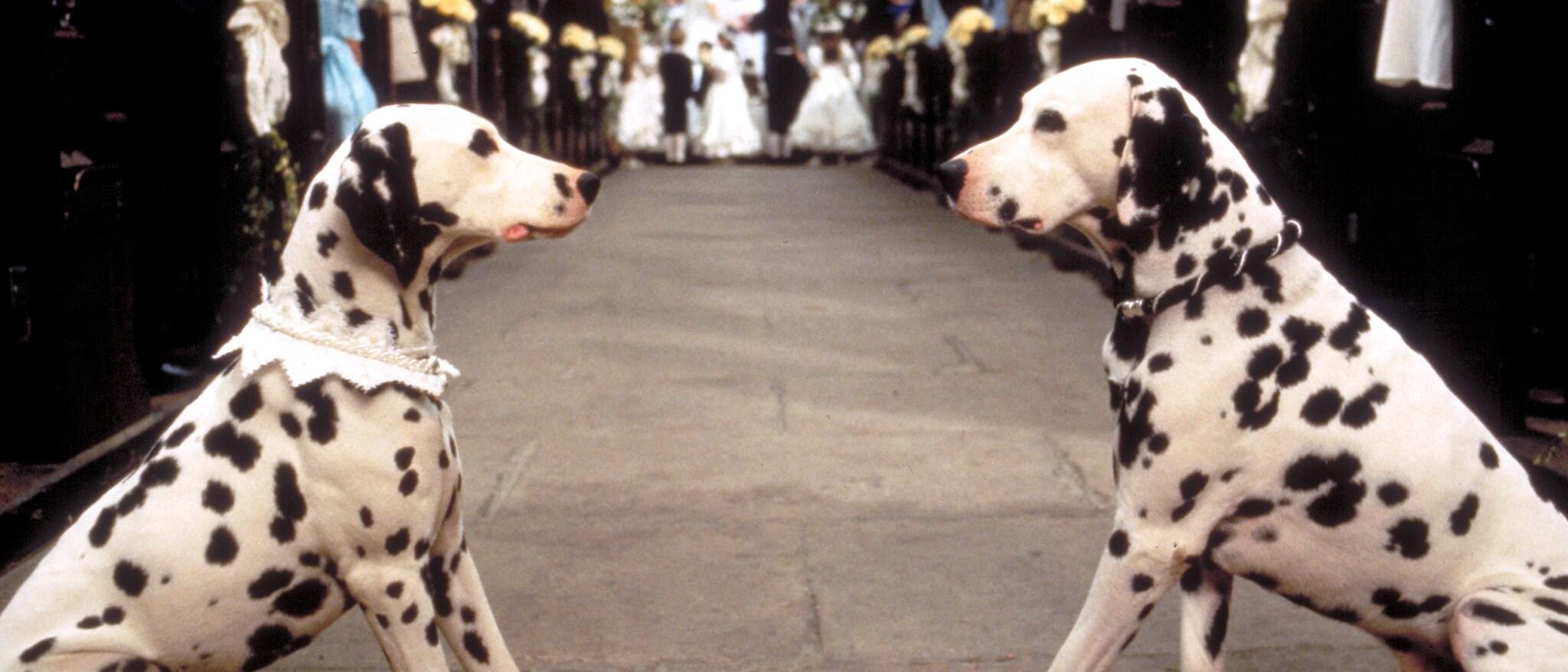 101 Dalmatians Hero