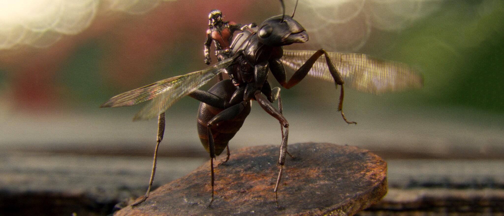 Ant-Man Hero