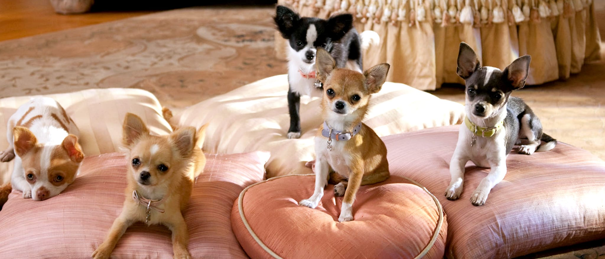 Beverly Hills Chihuahua Hero