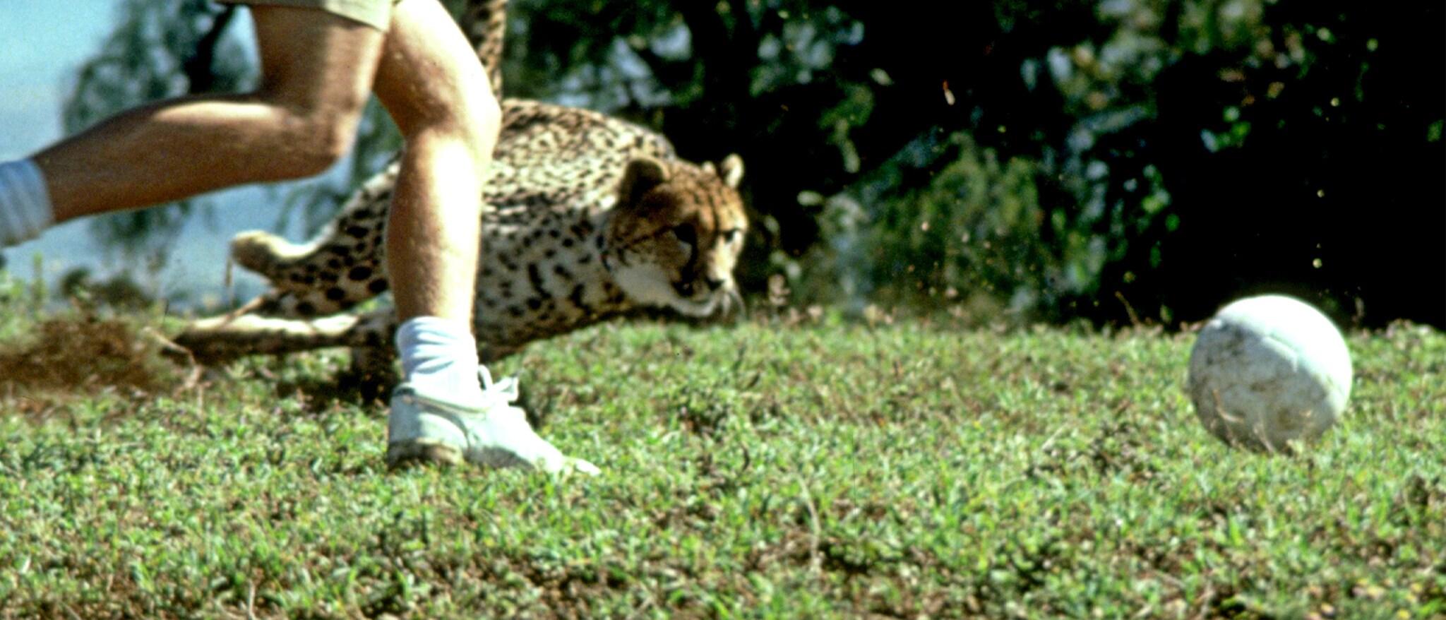 Cheetah Hero