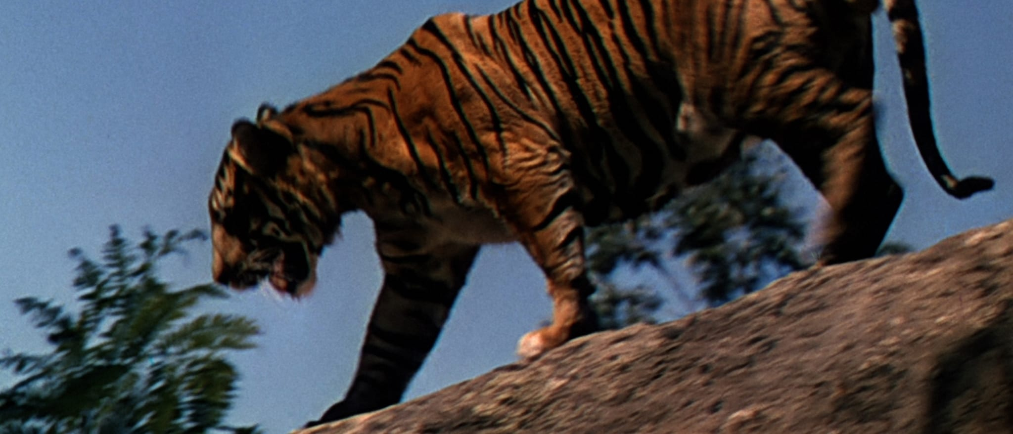 Jungle Cat Hero
