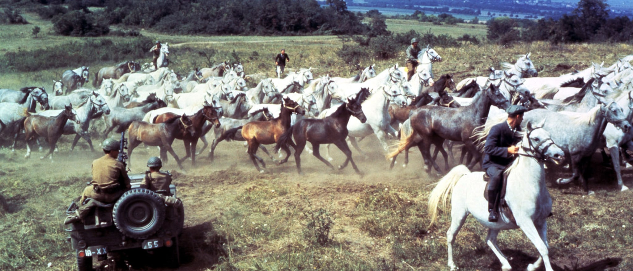 Miracle of the White Stallions Hero