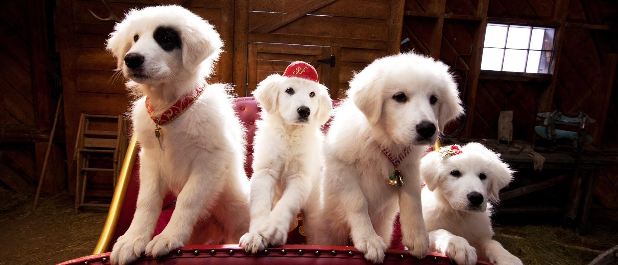 Santa Paws 2: The Santa Pups Hero