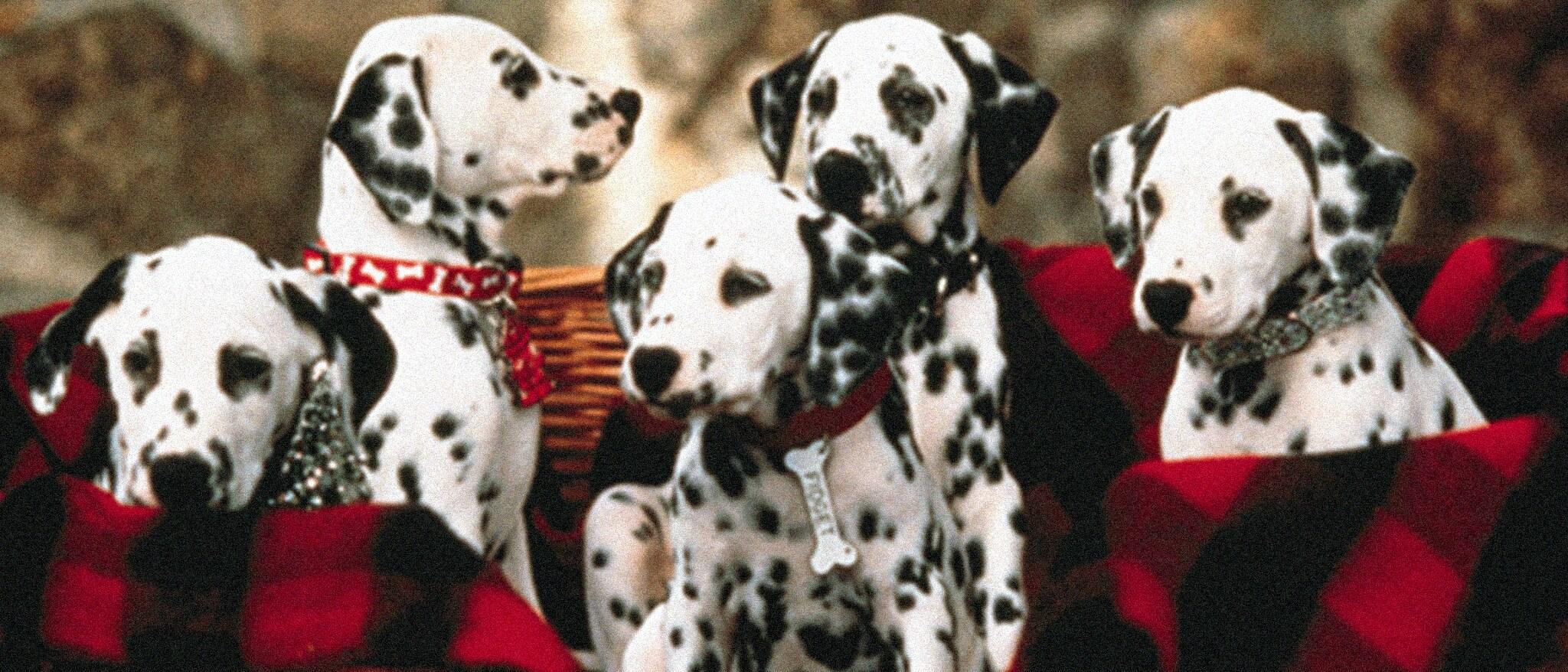 Sing Along Songs: 101 Dalmatians -- Pongo & Perdita Hero