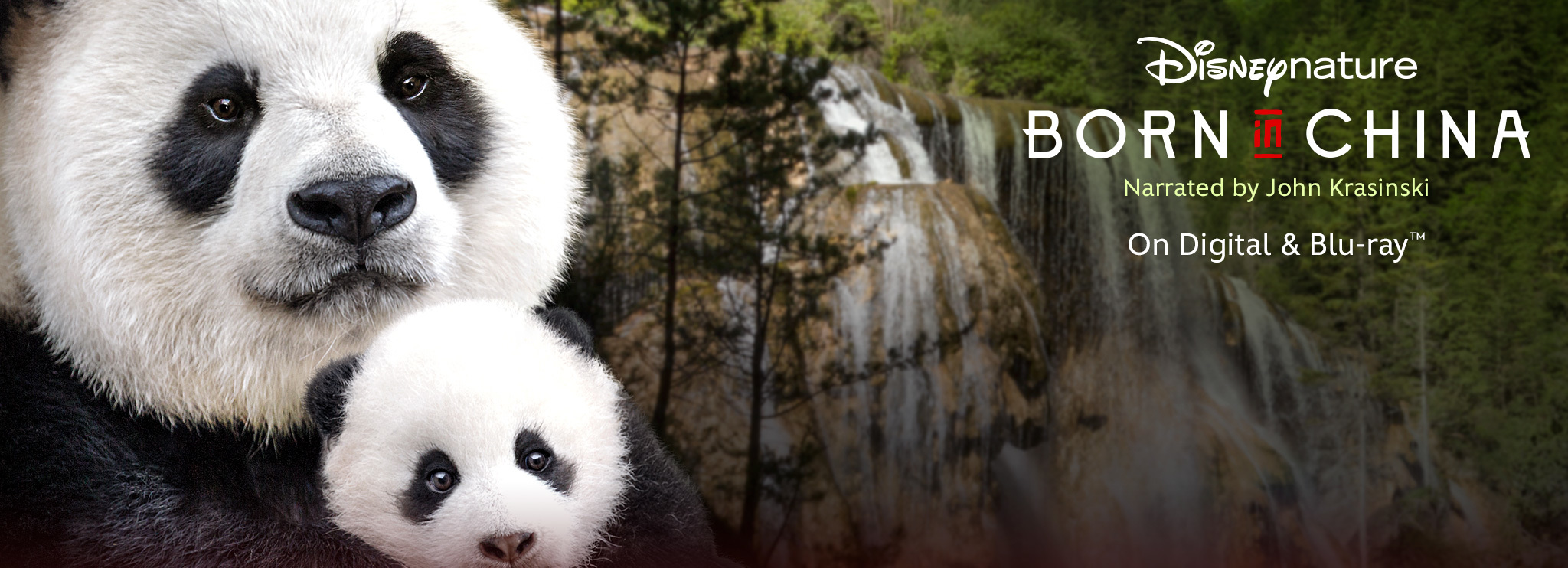 born in china official website disneynature