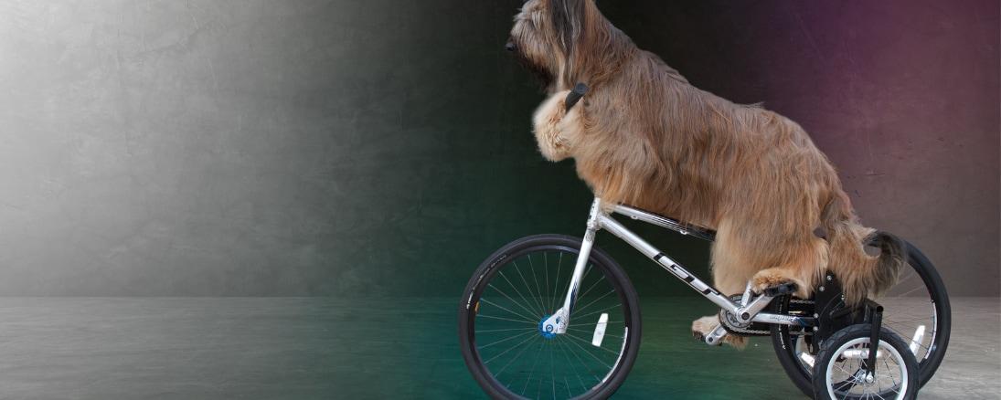 A dog riding a bike from The World's Greatest Dogs