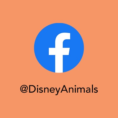 Protect the Pride - FB - Disney Animals