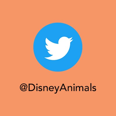 Protect the Pride - Twitter - Disney Animals
