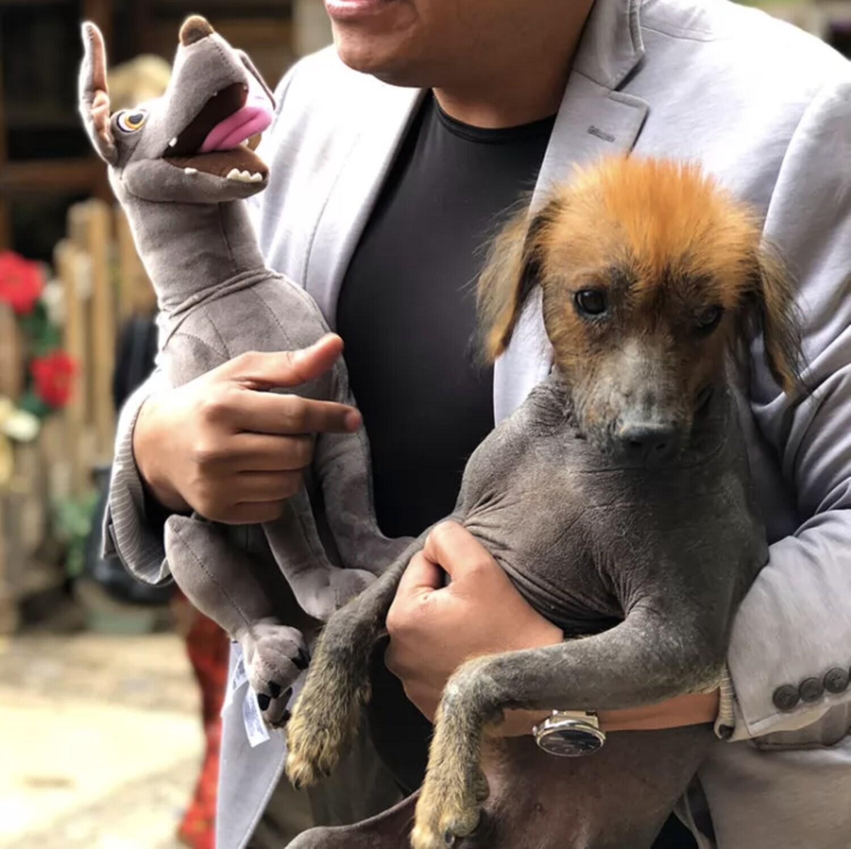 dante plush with xolo dog