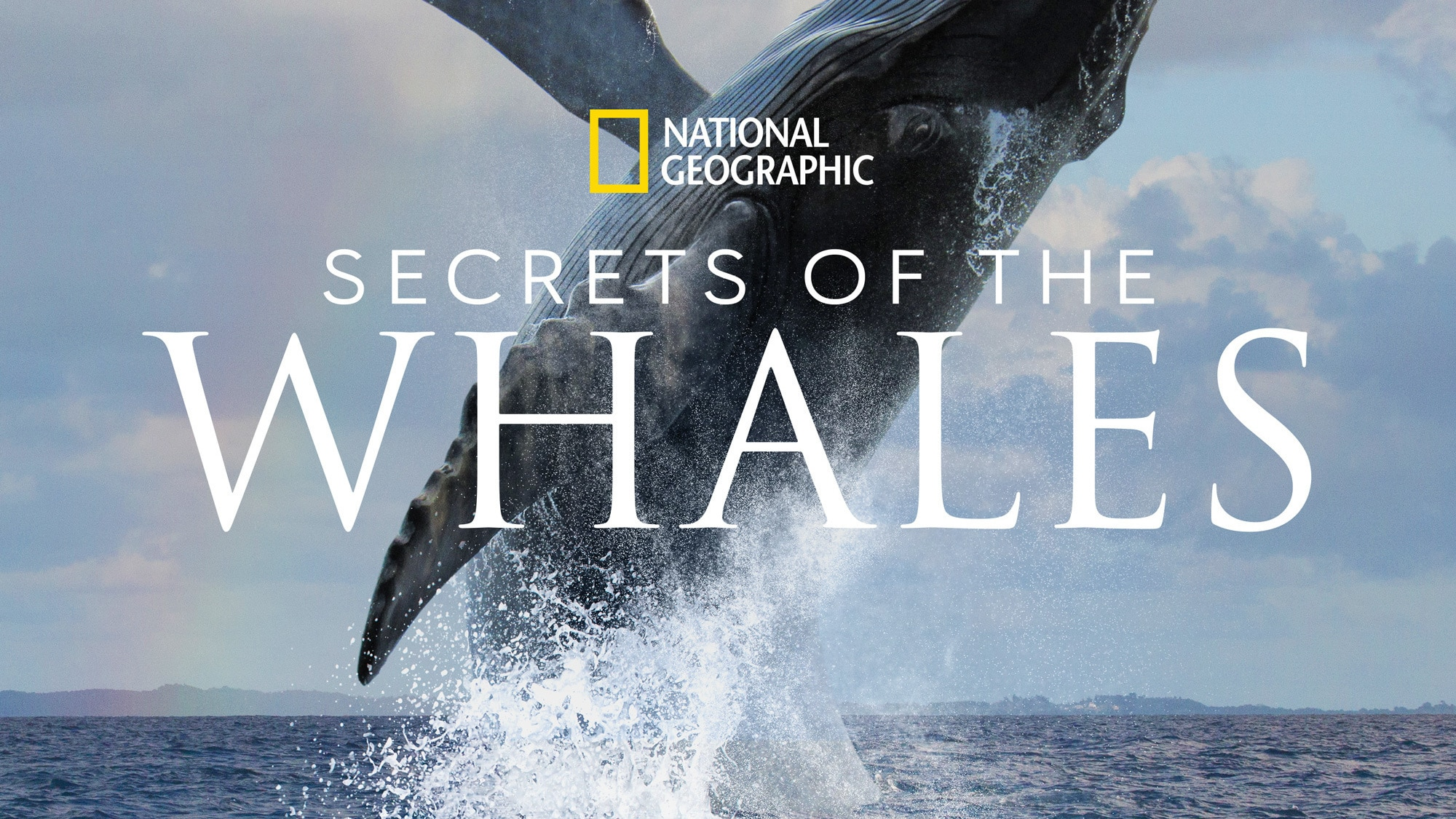 SECRETS OF THE WHALES - From executive producer and National Geographic Explorer-at-Large James Cameron and National Geographic Explorer Brian Skerry comes SECRETS OF THE WHALES. Narrated by Sigourney Weaver, the four-part event series tells the stories of the extraordinary cultures of five different whale species. (National Geographic)