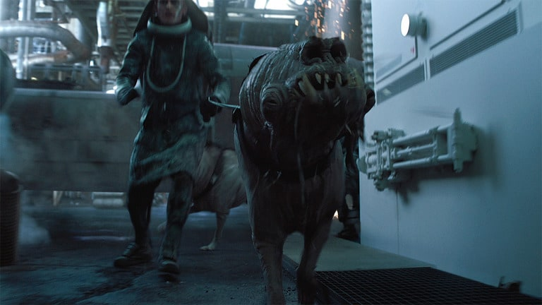 Image result for Corellian hound