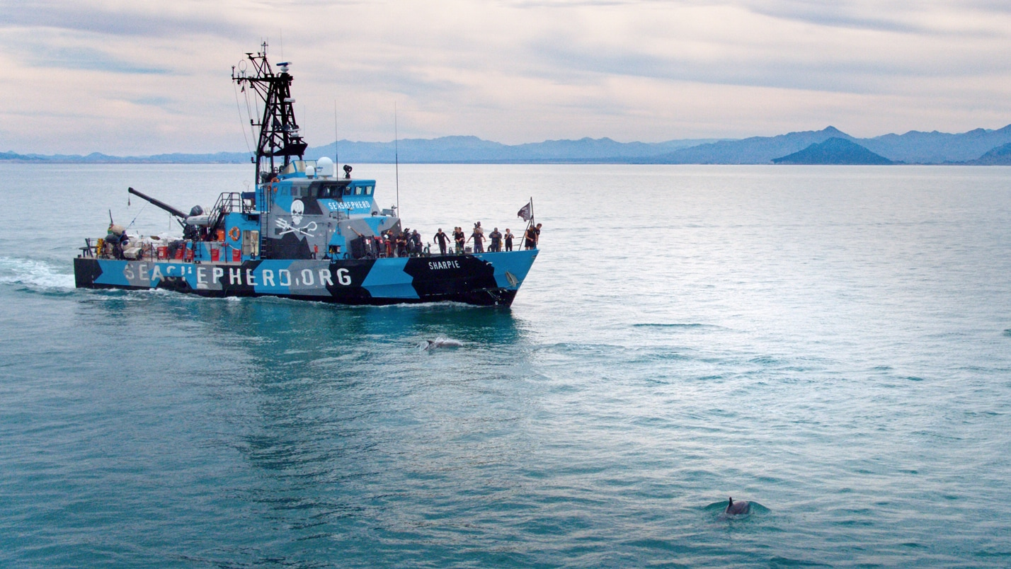 Sea Shepherd Vessel in the coastal waters of San Felipe (Photo by National Geographic)