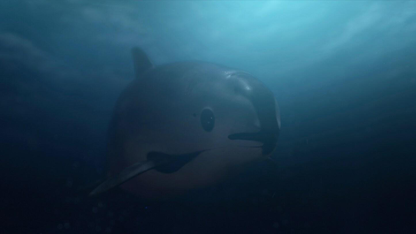 Vaquita swimming underwater (Photo by National Geographic)