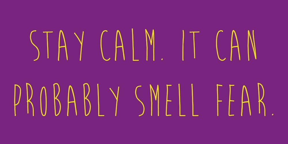 """Meme that says: """"Stay calm. It can probably smell fear."""""""