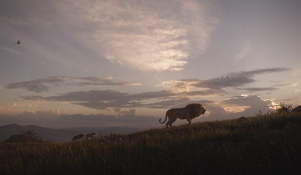 Zazu, Nala and Simba following Mufasa - Live action The Lion King (2019)