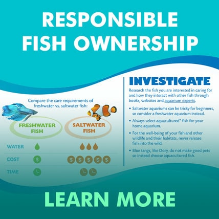 Finding Dory - Responsible Fish Ownership - SEA