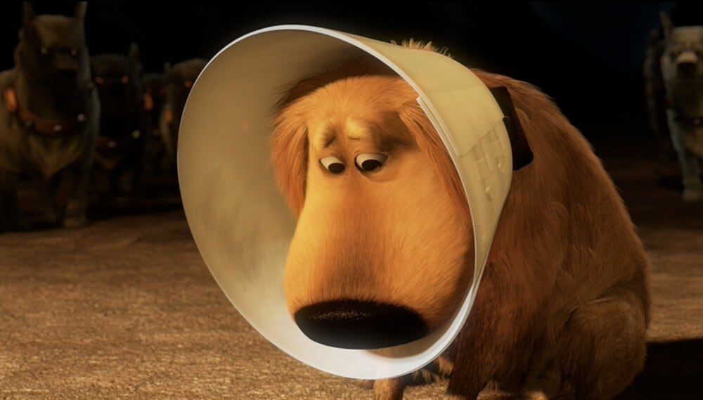 "Dug wearing a cone in the movie ""Up"""