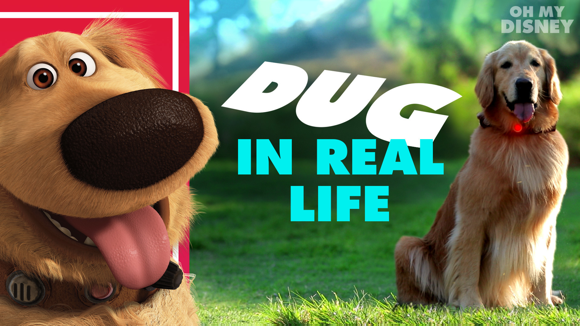 Disney•Pixar's Dug the Talking Dog In Real Life | Oh My Disney IRL