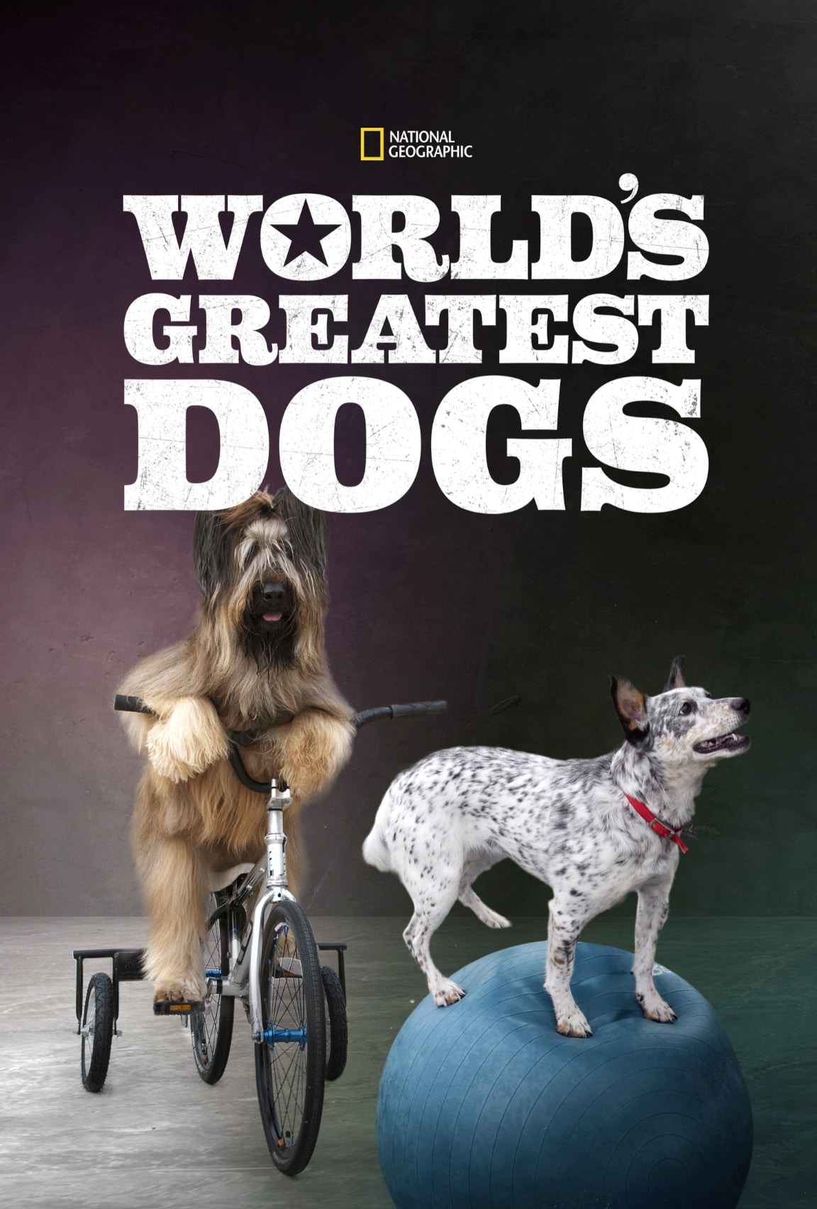 World's Greatest Dogs (2016)